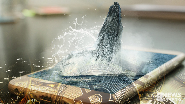 Bitcoin Whales Acquires $367B Worth of Bitcoin
