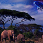NFTs and on-Demand Satellites Collaborated To Save Africa's Wildlife