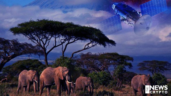 NFTs and on-Demand Satellites Are Collaborated To Save Africa's Wildlife