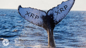 Ripple Whales Make XRP Price To Move High