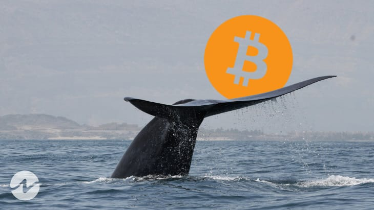 Bitcoin Whales Starts Dumping as On-Chain Data Reveals