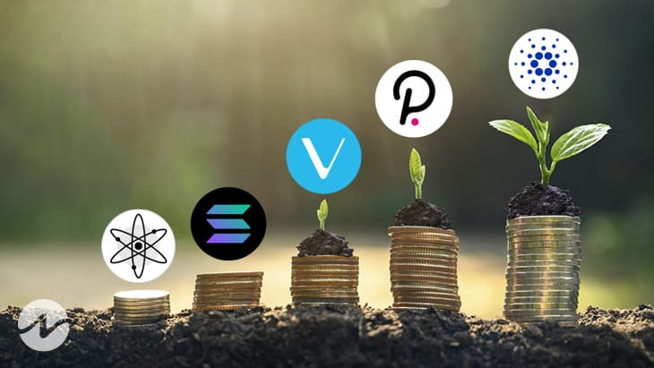 Want to Know the Top 5 Coins For Staking in 2021? Find Out!